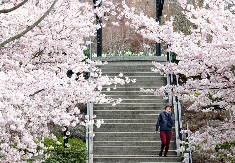0409-Blossoms 1ww